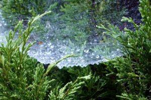 Графен может решить проблему нехватки питьевой воды