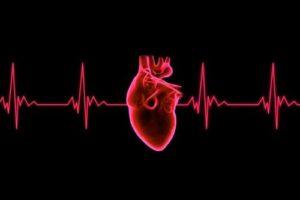 Американские ученые создали искусственное сердце