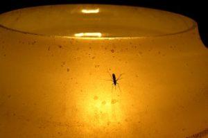 жизнь комара