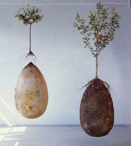 Новый вид захоронения - каждый станет деревом