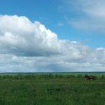 Новый транспорт на одной живой лошадиной силе из России
