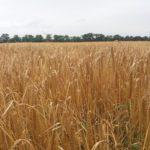 Насекомые с ГМО вирусами — новая защита или оружие