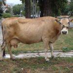 Ученые обнаружили — молоко продлевает жизнь