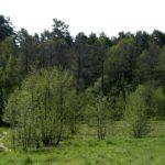Мебельная компания высаживает больше деревьев, чем использует
