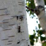 Научный абсурд — муравьи виновны в глобальном потеплении