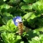 У пчёл обнаружены математические способности