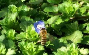 пчёлы, математические способности,