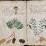 Рукопись Войнича после расшифровки породила новые тайны