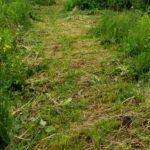 Почему нам нравится запах скошенной травы