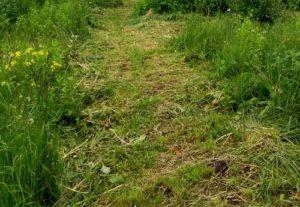 трава, запах,