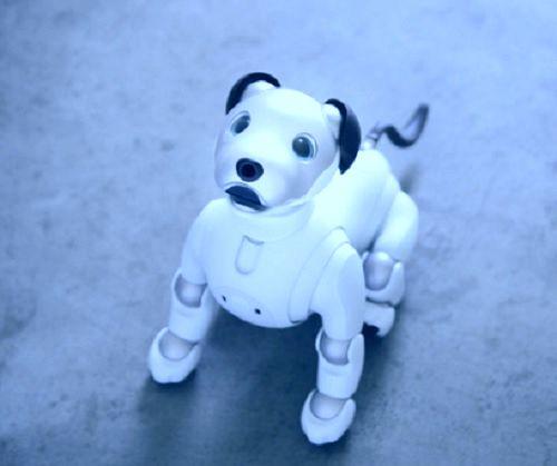 робот-собака, роботы,