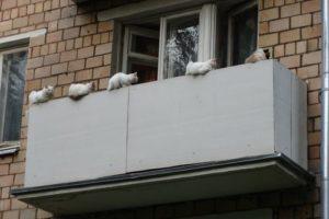 кошки,лечение,