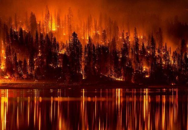 пожар, лесные пожары,