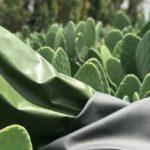 Искусственная кожа стала производится из… кактусов