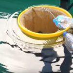 Новый метод очистки воды спасает от загрязнения океаны